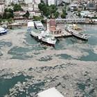 Морска слуз застрашава и турски егейски острови в разгара на сезона (Видео)