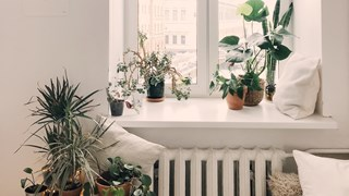 Как да спасим цветята с изсъхнали листа