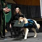 Голдън ретривър получи почетна диплома за висше образование