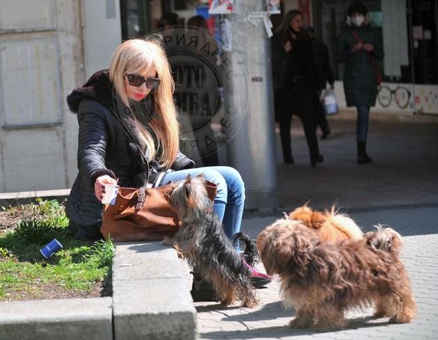 Муки на разходка с три кучета