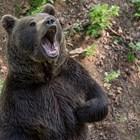 Ловци от Казанлъшко с апел:  Искаме да гръмнем мечката!