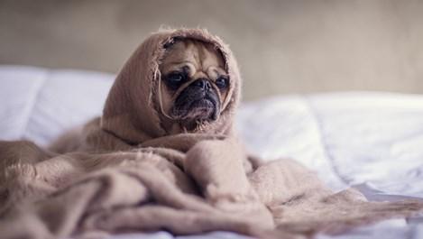 Как да разберем дали домашният любимец е болен