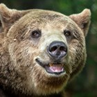 100 кила качи мечокът Веско