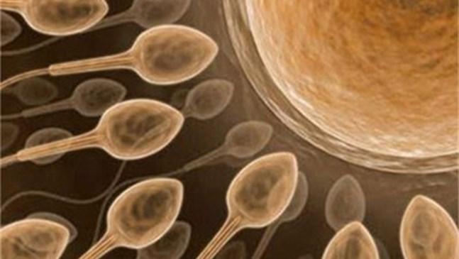 Оплодили 26 жени с чужда сперма при ин витро процедури в Холандия