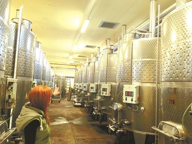 След като гроздето е докарано в избата то пада гравитачно през отвори директно във ферментатора.