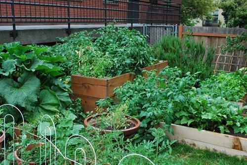 Подправки в градината