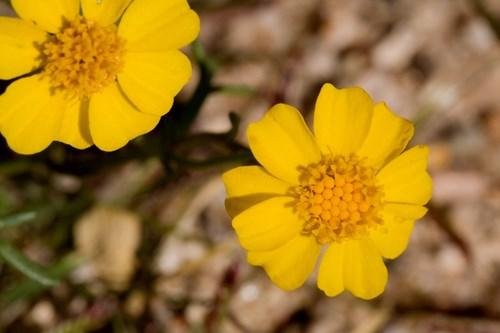 2 нетрадиционни предложения за цветни лехи и алпинеуми
