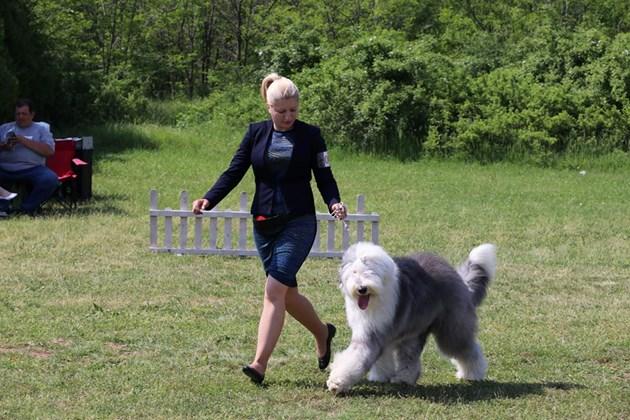 Куче става второкласник