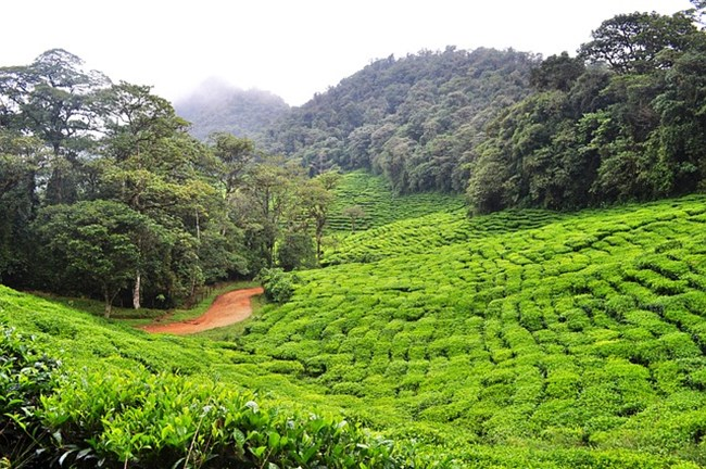 Малайзия. СНИМКА: Pixabay