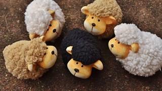 Черната овца в семейството – егати яката работа
