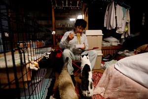 Японецът вечеря полуготови спагети под зоркия поглед на част от своите котки.