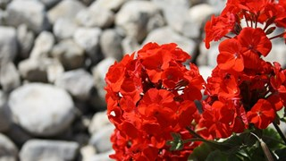 Грижи за цветята през октомври