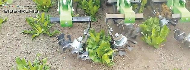Biosarchio е майстор на плитката, нежна почвообработка