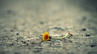 Джонатан Уийнър: Ключът към безсмъртието се крие в почвата на гробищата