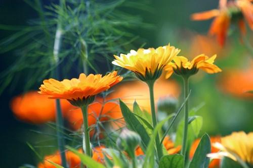 Билки с красиви цветове