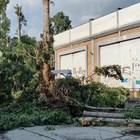 Сеч на дървета в столицата