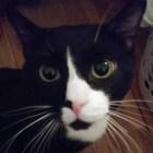 Котка оживя след 35 минути в пералнята, стопанката й я изпрала с дрехите си