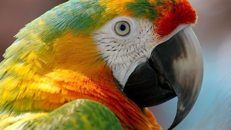 Пеещите домашни животни гонят лоши мисли