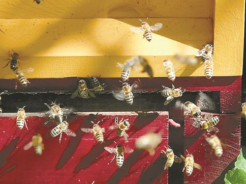 Какво обичат пчелите