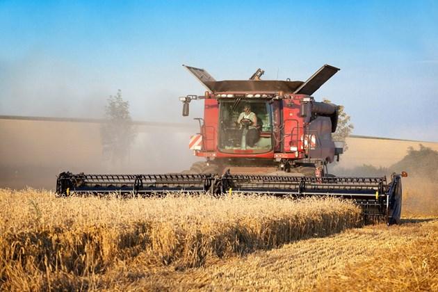 Валежи унищожават пшеницата