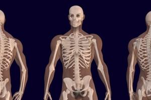 Здрави ли са костите ви?