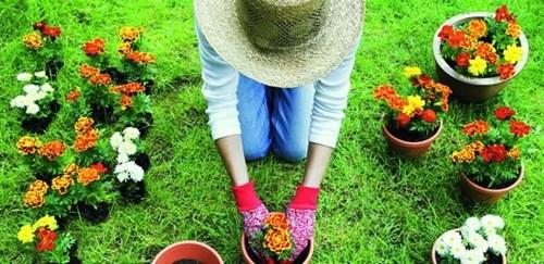 Актуални грижи за цветната градина