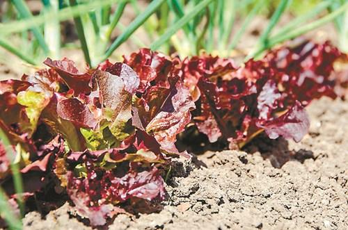 Обеззаразяване на почвата