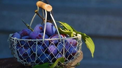 8 плода на ден за щастие