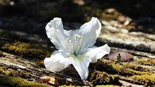 Кои цветя носят късмет, пари и любов