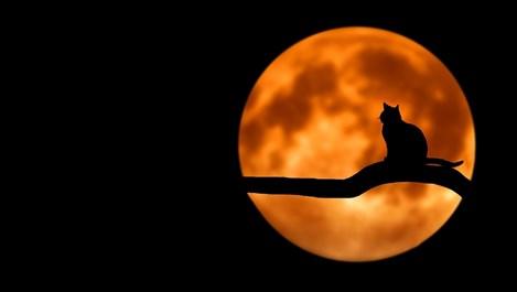 Луната в Лъв е благоприятна за тези зодии