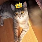 Котка стана инфлуенсър