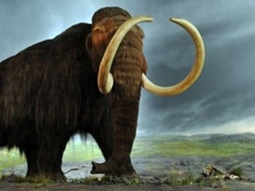 Мамутите изчезнали преди 12 000 години заради рязкото изменение на климата