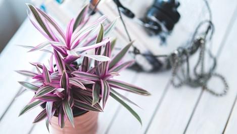 Как да се грижим за стайните растения през зимата