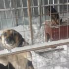 Търсят одеяла за бездомни кучета