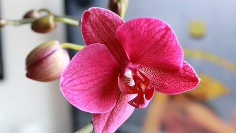 Как да се грижим за орхидеите