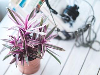 Стайни растения с оздравително действие