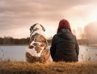 Кучетата на дебели хора затлъстяват