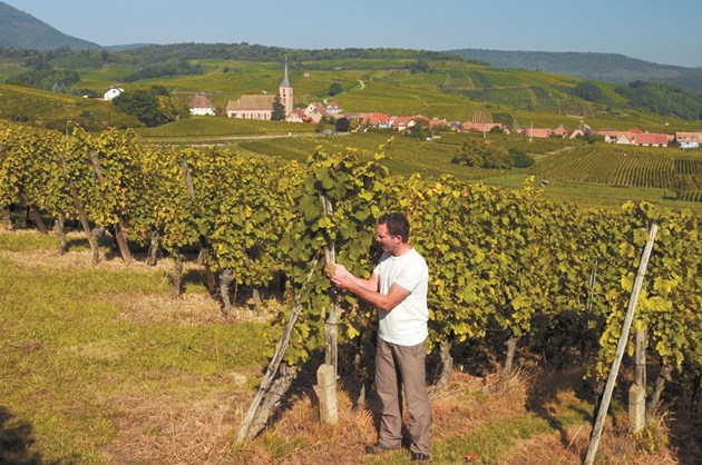Лозаро-винарският сектор в Европа просперира, защото държавите го стимулират