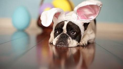 И твоето куче очаква Великден (галерия)