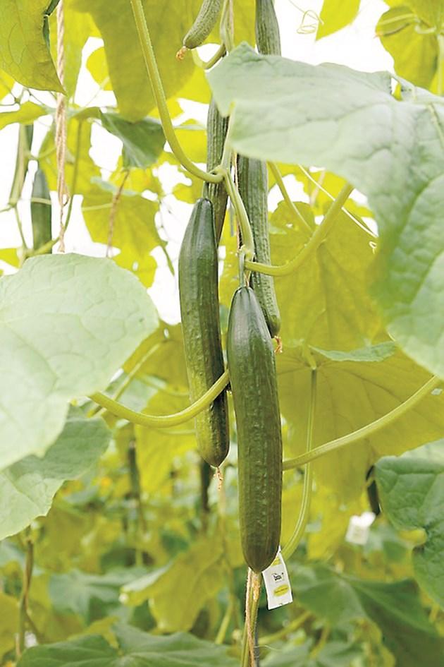 Качествени плодове – благодарение на балансирано подхранване