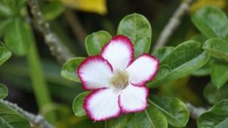 Красиви, но много опасни растения