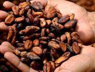 Горчиви и солени храни изчистват токсините
