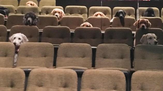 Служебни кучета гледаха мюзикъл в рамките на обучението си