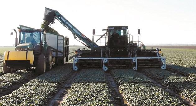 Мощният спаначен комбайн модел Spinach Harvester в действие по широки, безкрайни спаначени полета