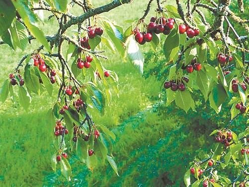 Кои са най-важните хранителни елементи за дръвчетата
