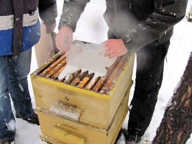 Трябва ви 1 кг пчелен мед (от здрави семейства), който се обвива в гъста марля и се полага върху рамките над кълбото.