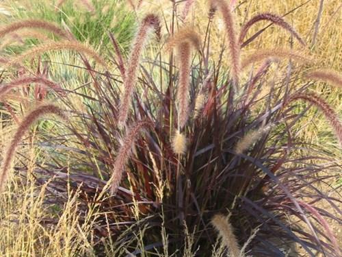 Елегантна есен с декоративните треви