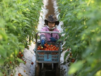 Роботи възраждатяпонските ферми