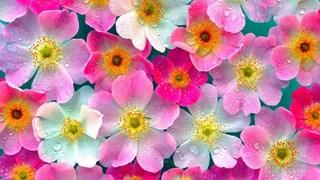 Какво да направим за цветята през февруари