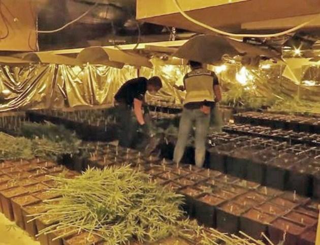 Фермата за марихуана била с модерно оборудване
